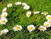 fiori primavera cuore-2